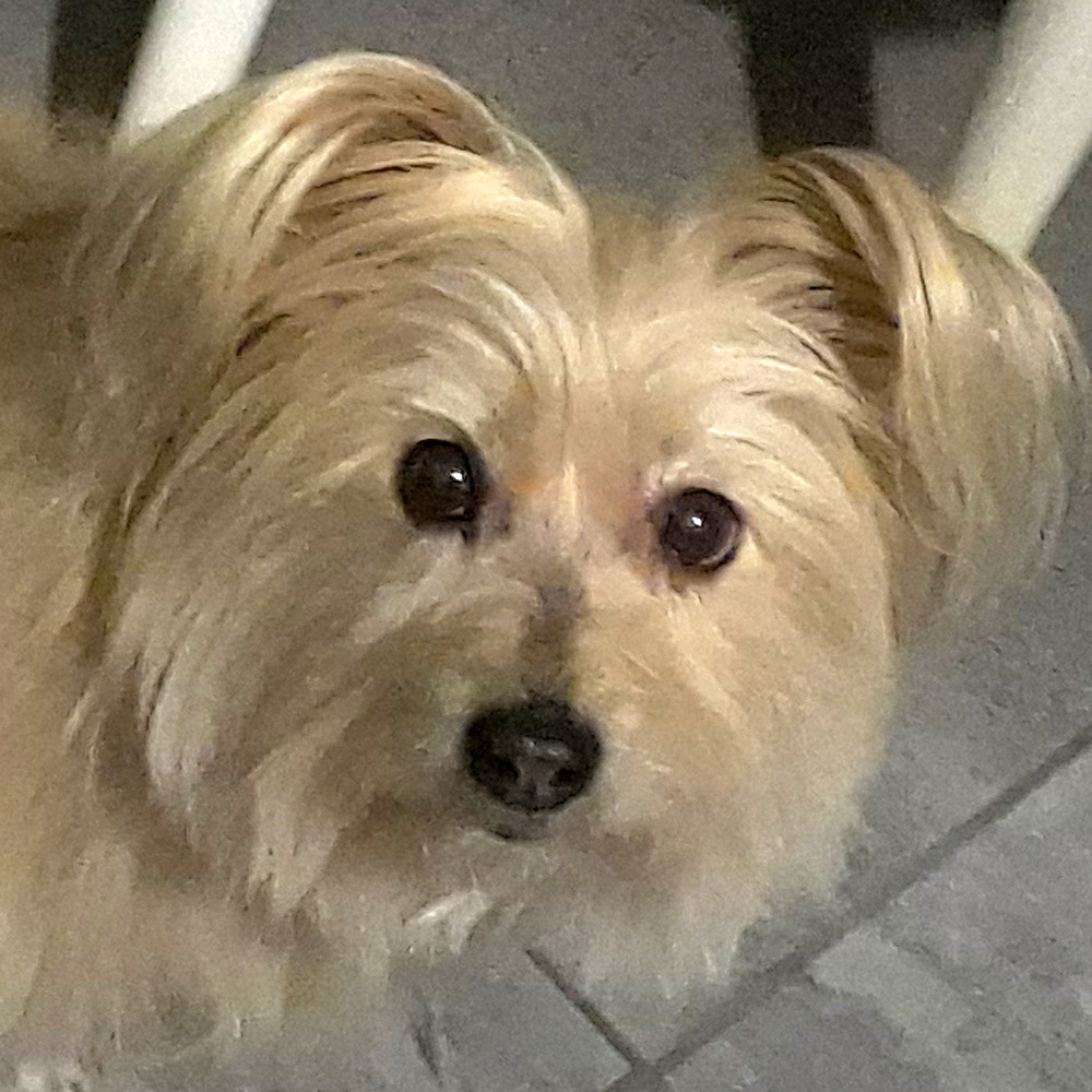 Kathy A. sent a picture of her rescued special girl, Gracie, who is a cancer survivor.