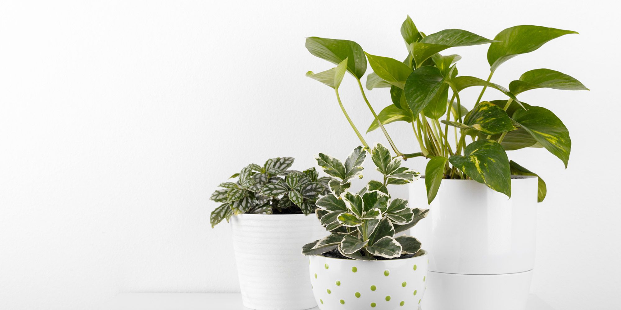 To take the dust off live or artificial leaves, lightly dampen a microfiber cloth and wipe over the leaves. This will also add a bit of moisture to the real plants too.