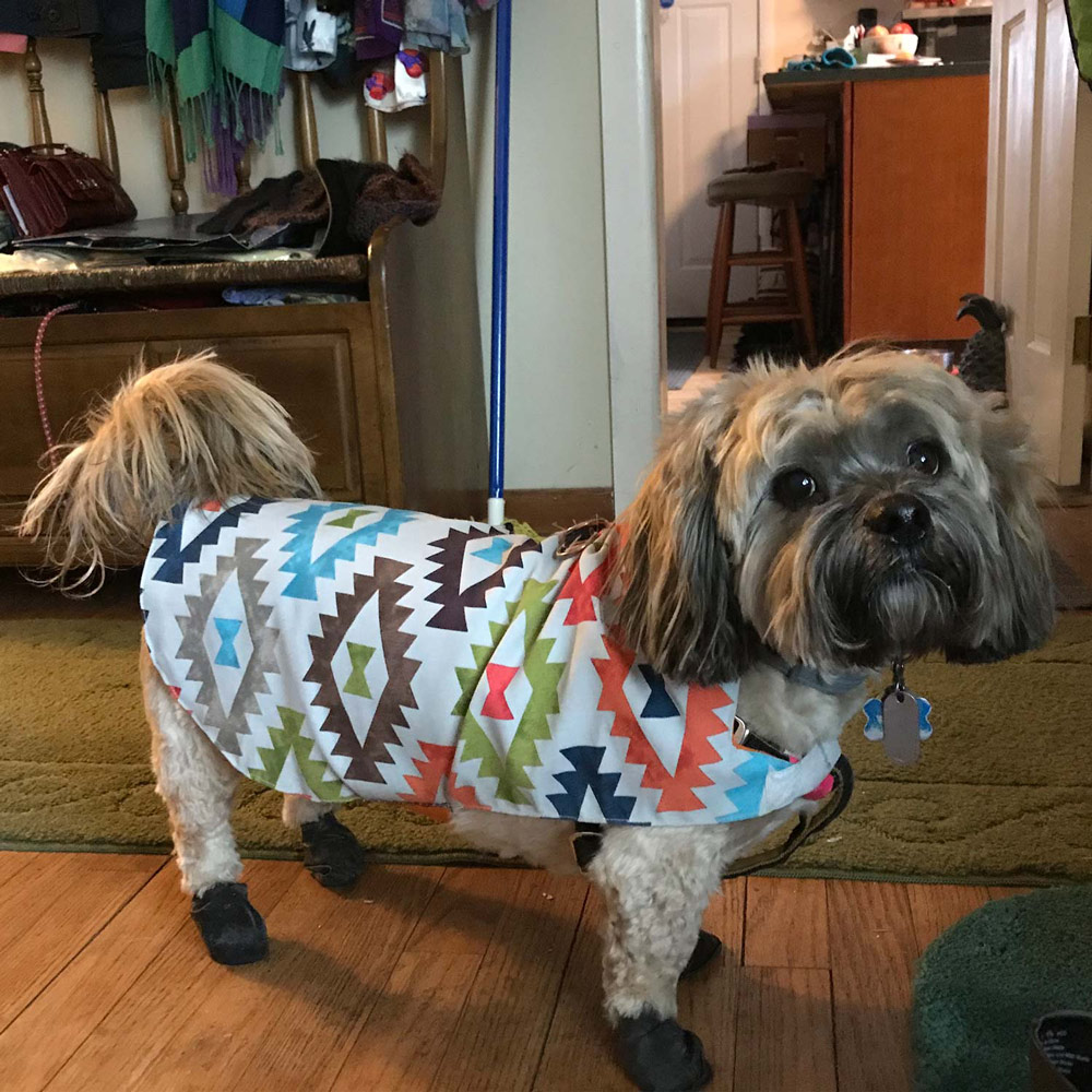 Angie H. in Kingston, NY sent a picture of her Woofie – he is sporting some waterproof dog boots and a rain slicker!