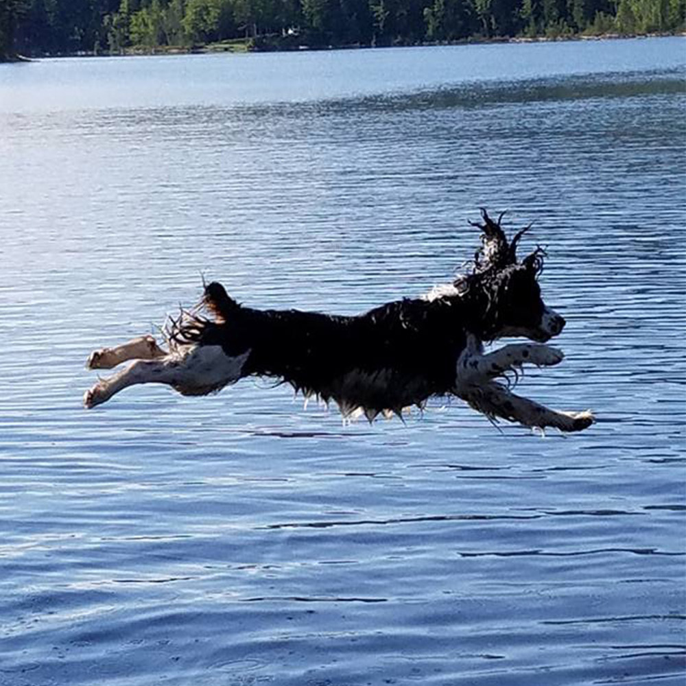 "Meet Lacy. She's getting her summer off to a great start, leaping and splashing into Lake Moxie in Maine. Lacy has some ""Moxie"", doesn't she?"